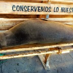 Traveling the Galapagos Islands Part 2
