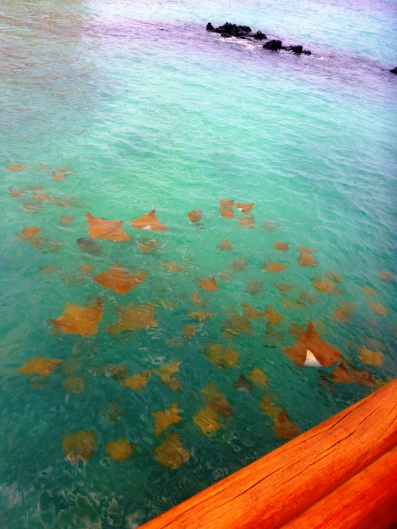 rays-from-the-pier