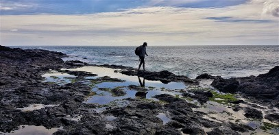 Exploring tide pools cape reinga