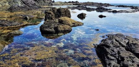 Clear water tidal pools cape reinga